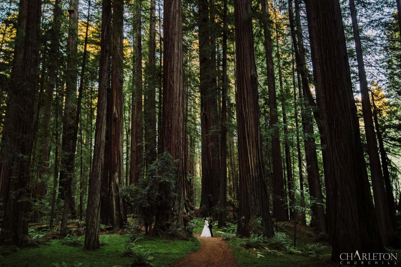 epic redwoods elopement wedding photos at the humboldt national park
