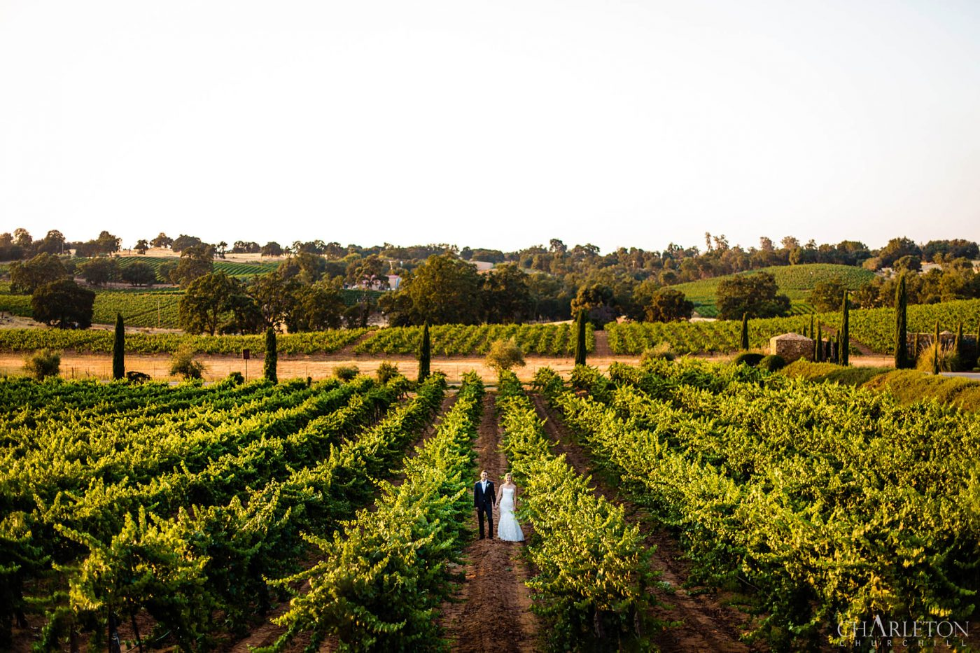 winery of bella piazza in plymouth for weddings and couples in the vineyard of amador county