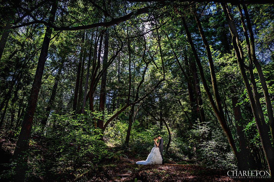 romantic redwood forest woods at griffith